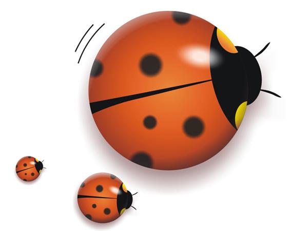 小小甲壳虫